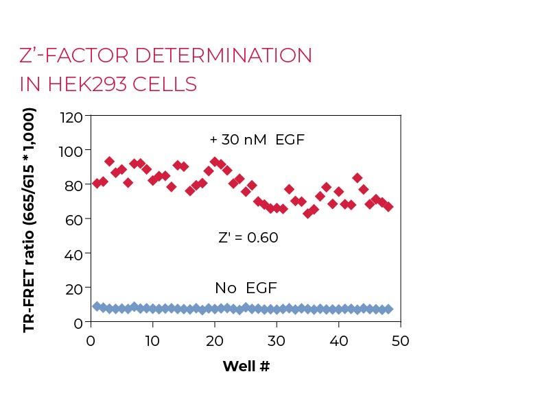 Z'-factor determination (QC Test) HEK293 cells