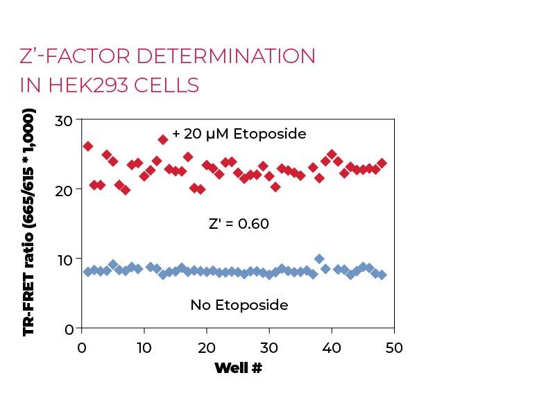 Z'-factor determination in HEK293 cells