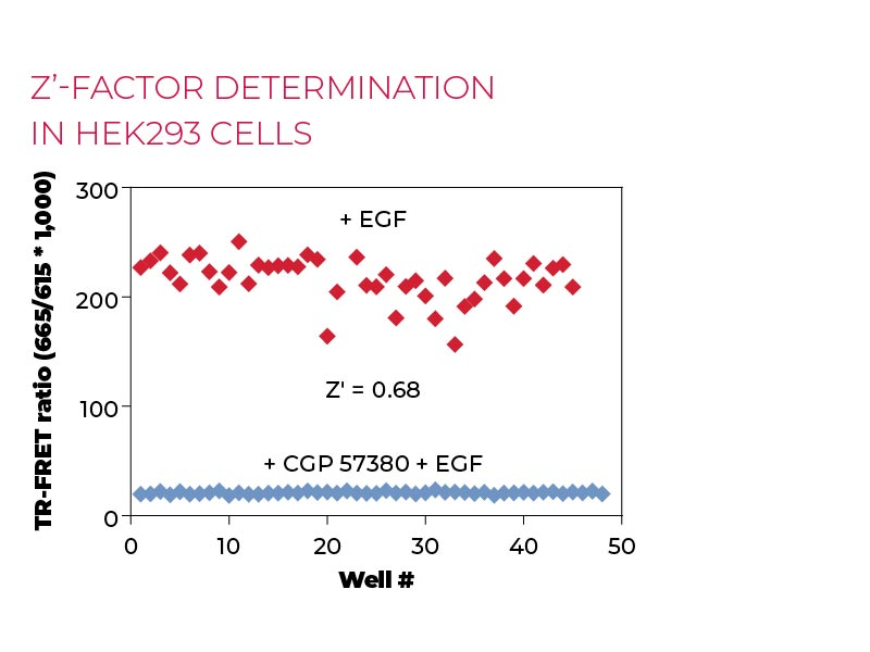 Z'-factor determination in HEK293 cells