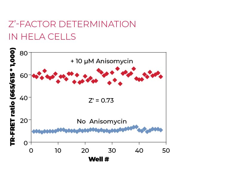 Z'-factor determination in HeLa cells