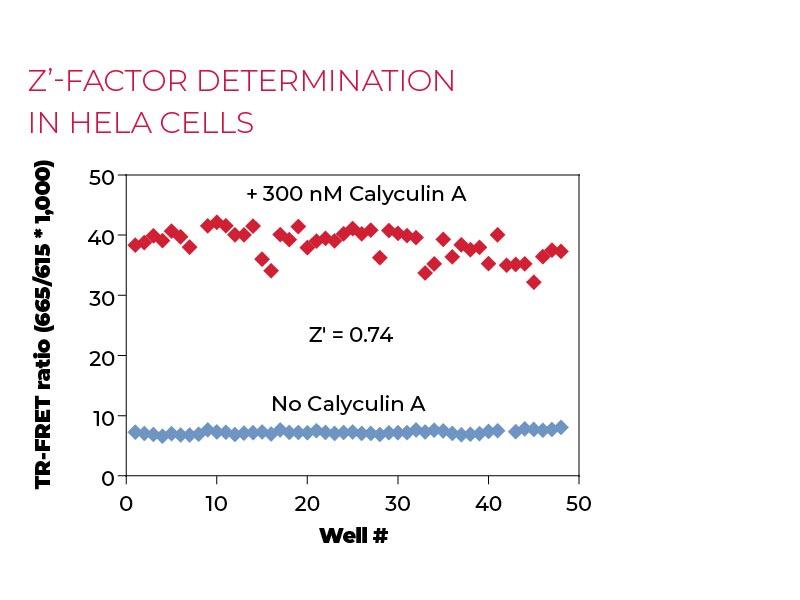 Z'-factor determination in Hela cells