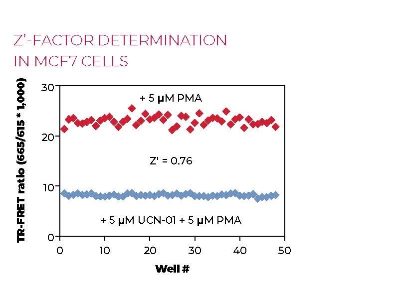 Z'-factor determination in MCF7 cells