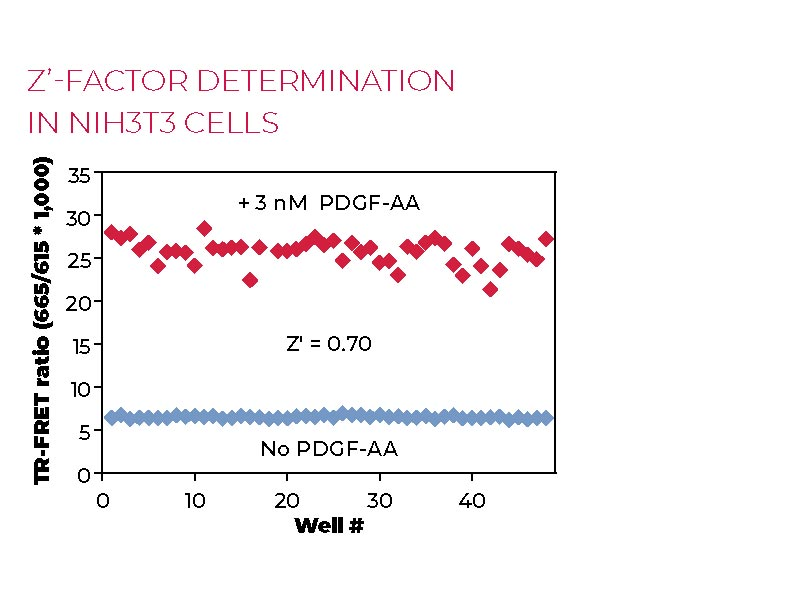 Z'-factor determination-NIH3T3-cells