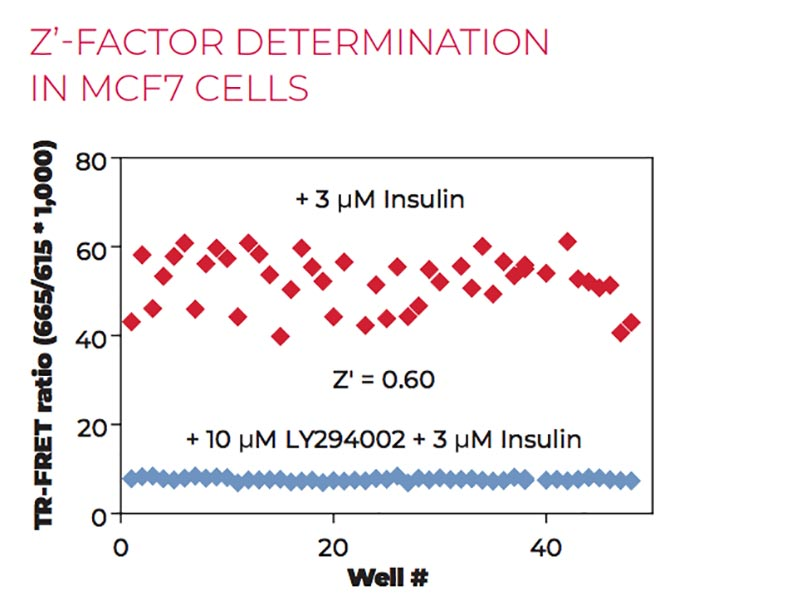 Z'-factor determination in MCF7 cells