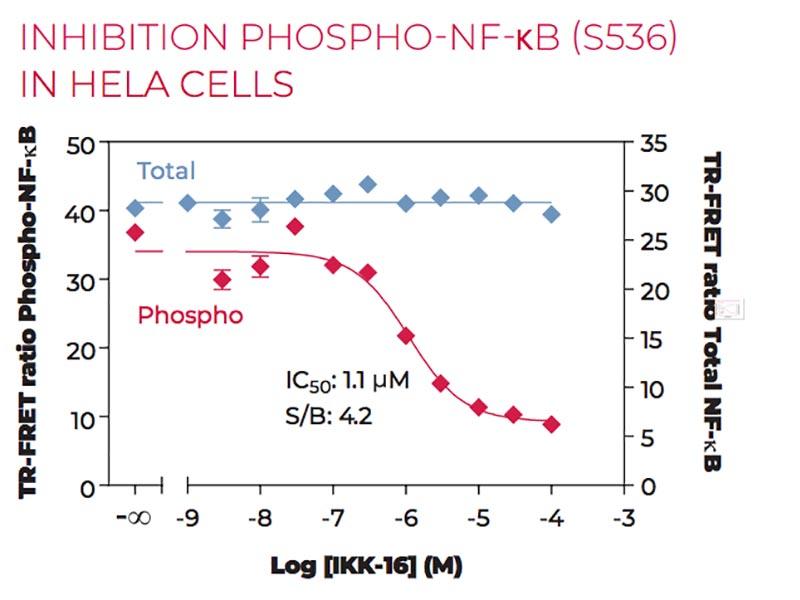 Inhibition of Phospho-NF-kB (S536) in HeLa cells