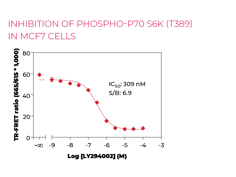 Inhibition of Phospho-P70 S6K (T389) in MCF7 cells