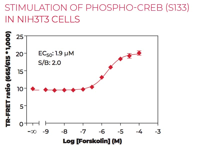 Stimulation of Phospho CREB (S133) in NIH3T3 cells