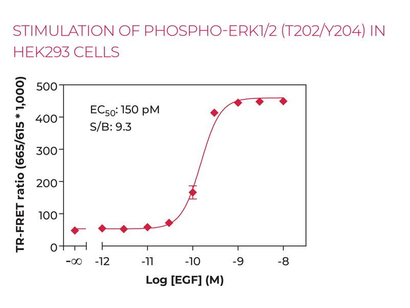 STIMULATION OF PHOSPHO-ERK1/2 (T202/Y204) IN HEK293 CELLS